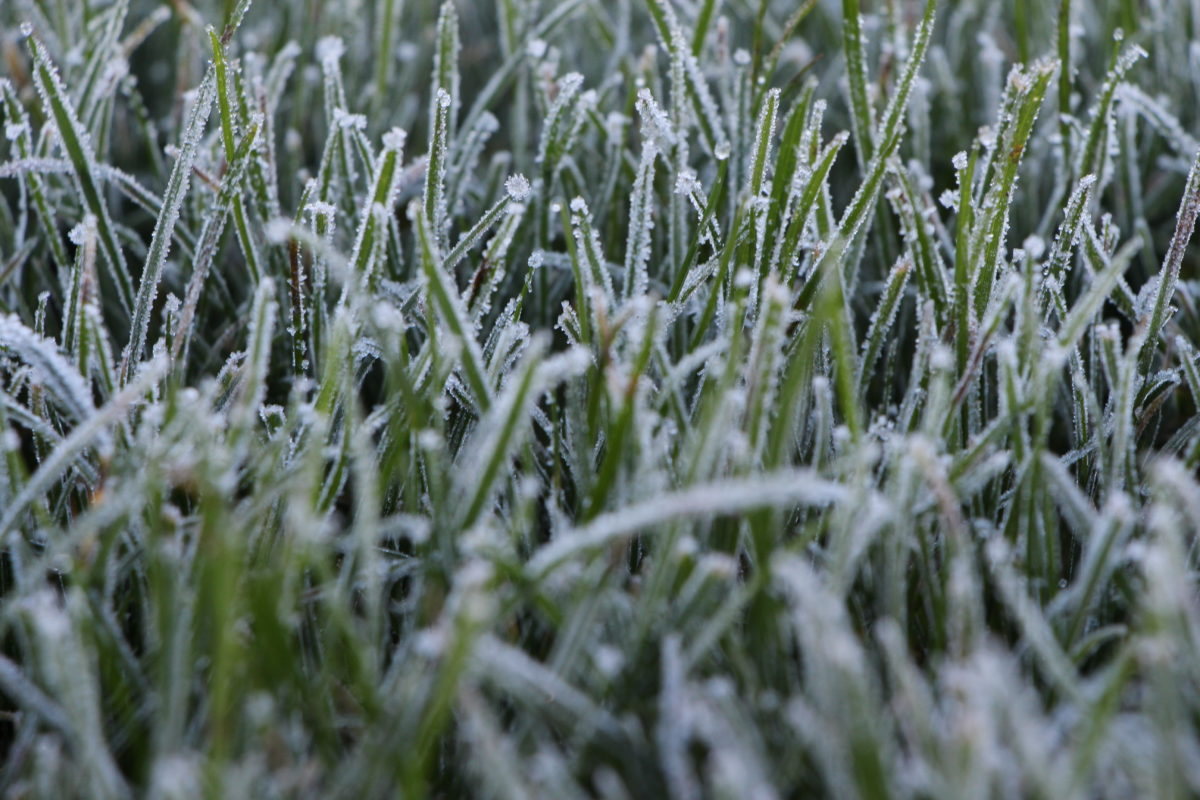 Winter: Gefrorene Wiese