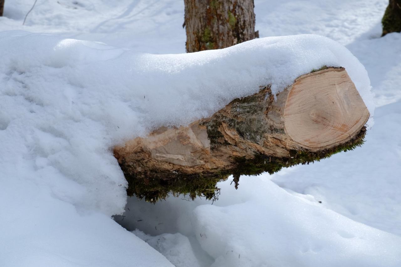 Januar: Bild von einem eingeschneiten Baumpfahl