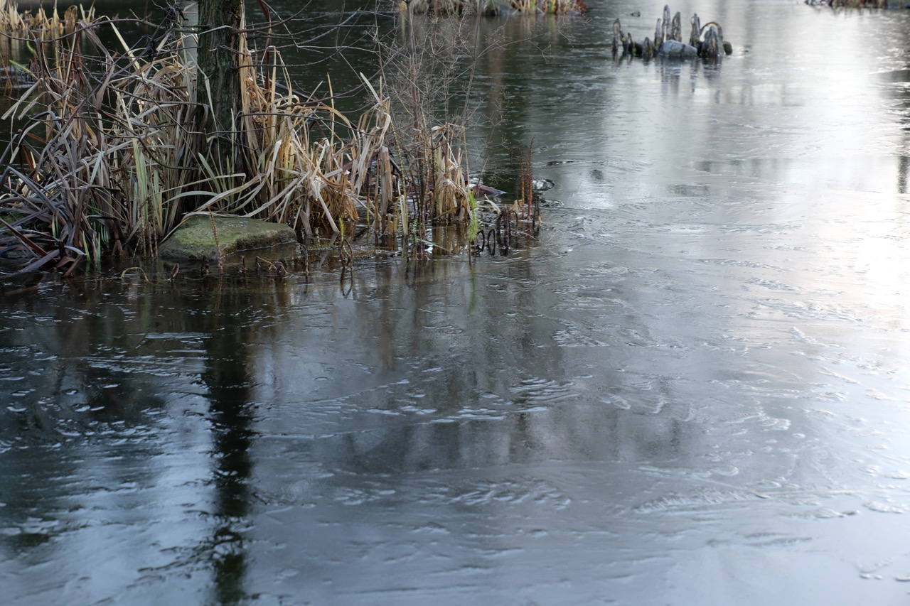 Januar: Zugefrorener Teich