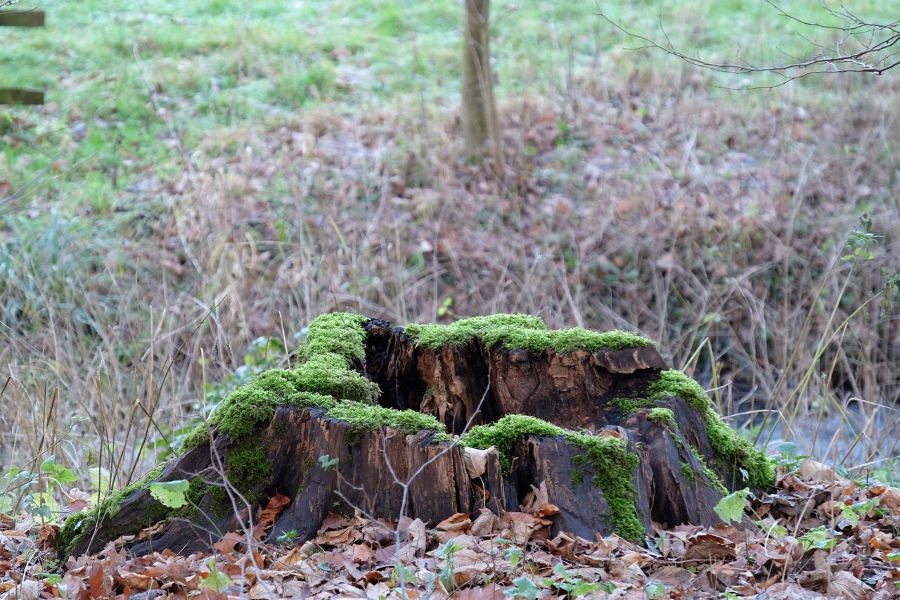 Februar: Bild Baumstumpf im Winter