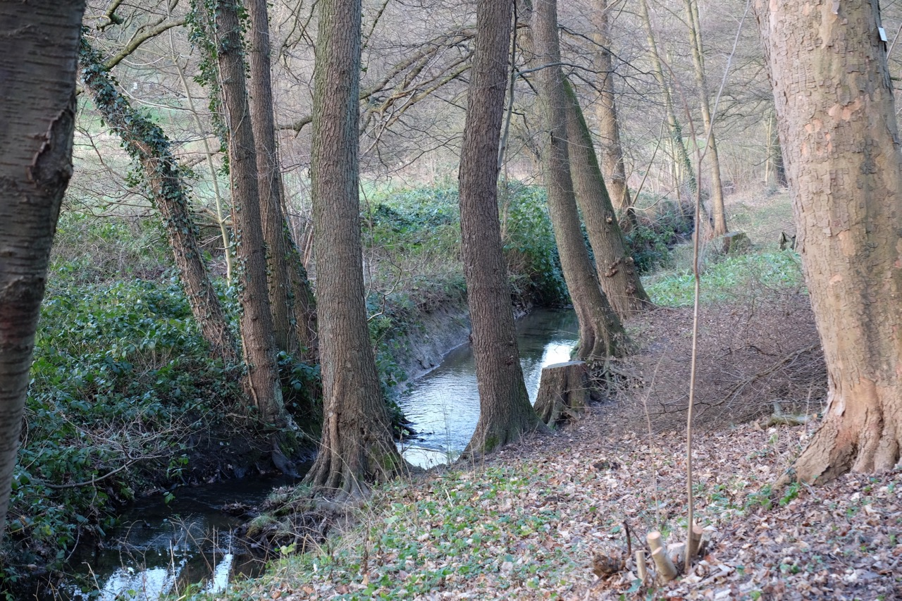 Natur: Bach zwischen Bäumen