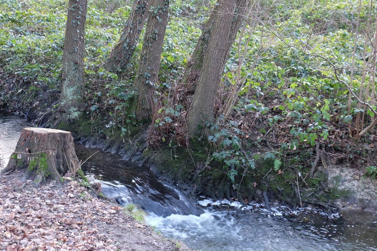 Natur: Kleines Gefälle im Bach