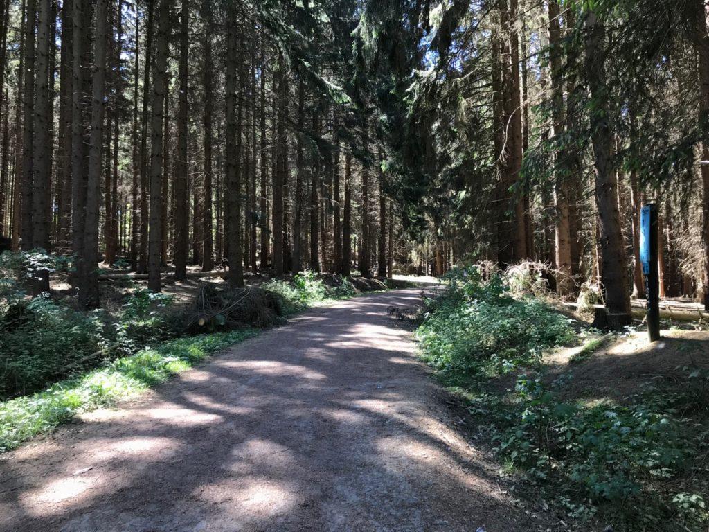 Wald: Weg durch Tannen