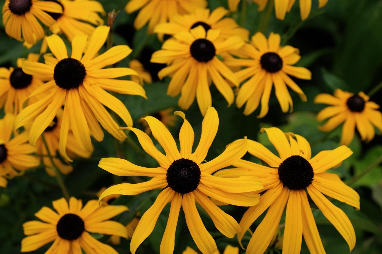 Gelbe Blumen im Rombergpark