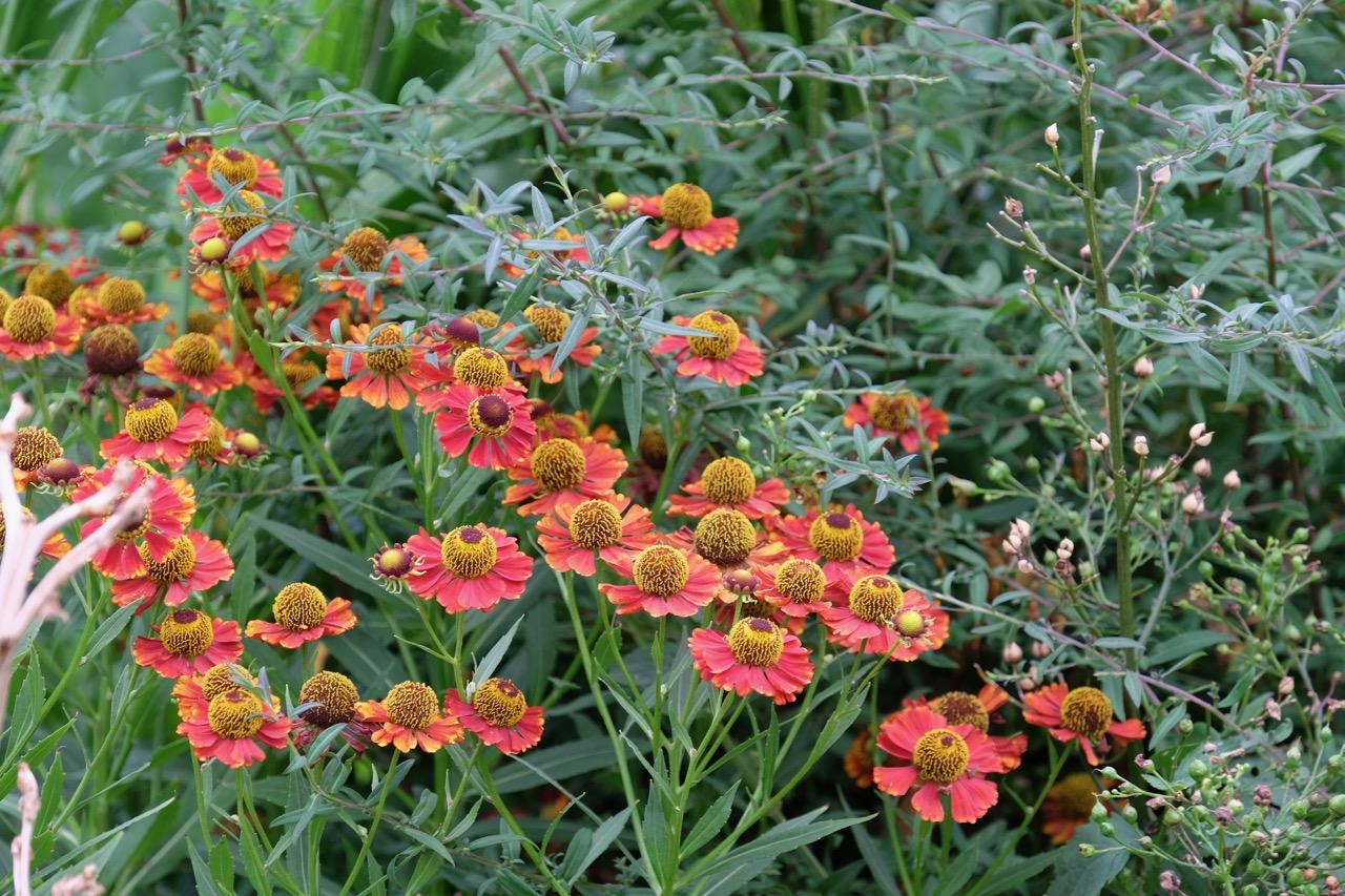 Rombergpark: Rote Blumen im Spätsommer