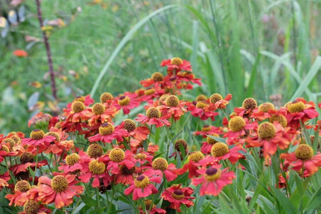 Blumen im Rombergpark