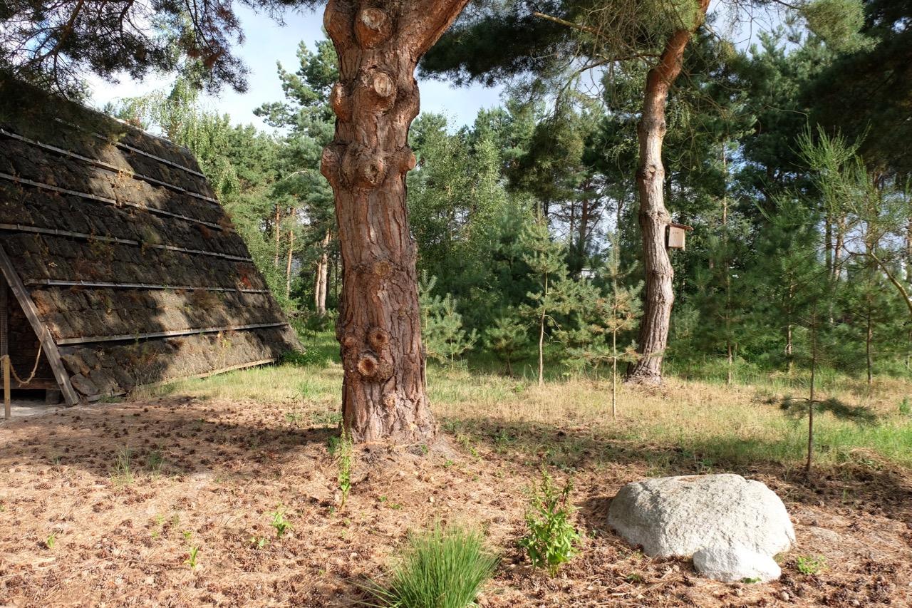 Heidelandschaft: Torfhaus mit Steinen und Pinien