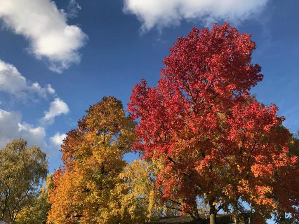 Herbst: Bunte Bäume vor blauem Himmel