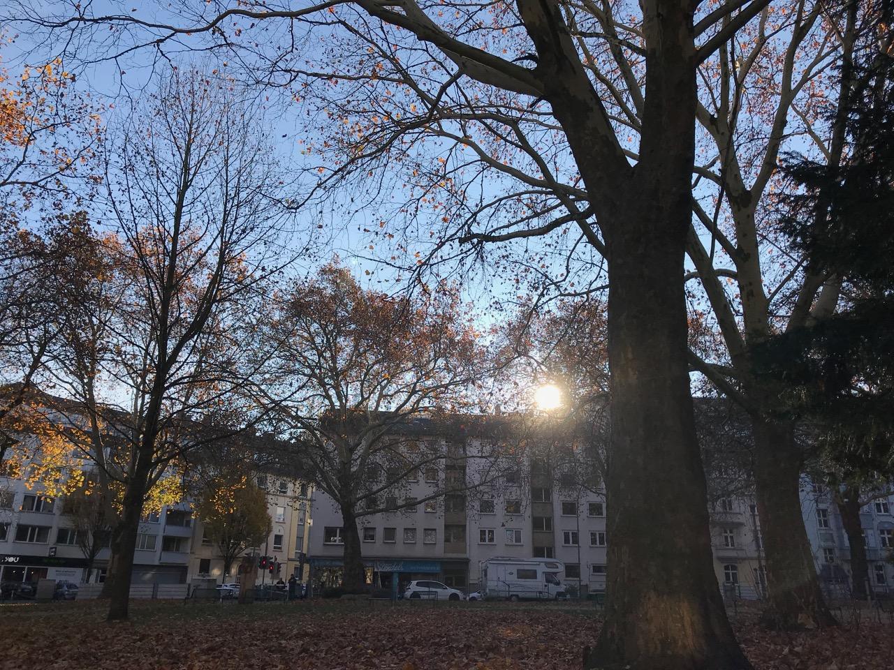 Sonntag morgen: Die Sonne scheint durch die fast entlaubten Bäume