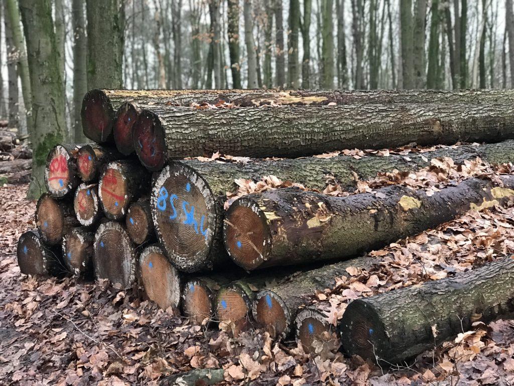 Wald mit Holzstapel