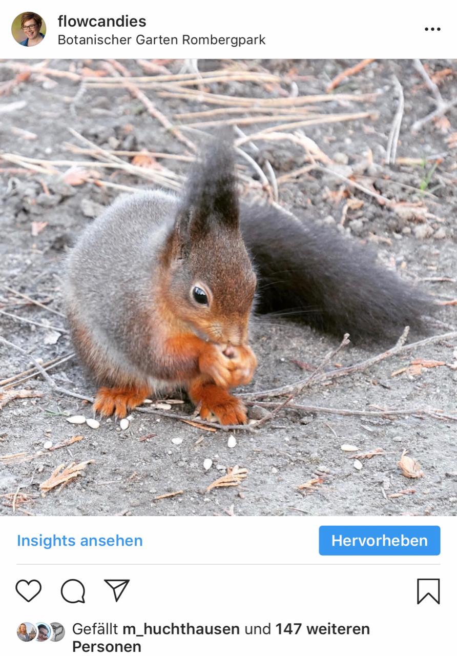 Instagram: Eichhörnchen