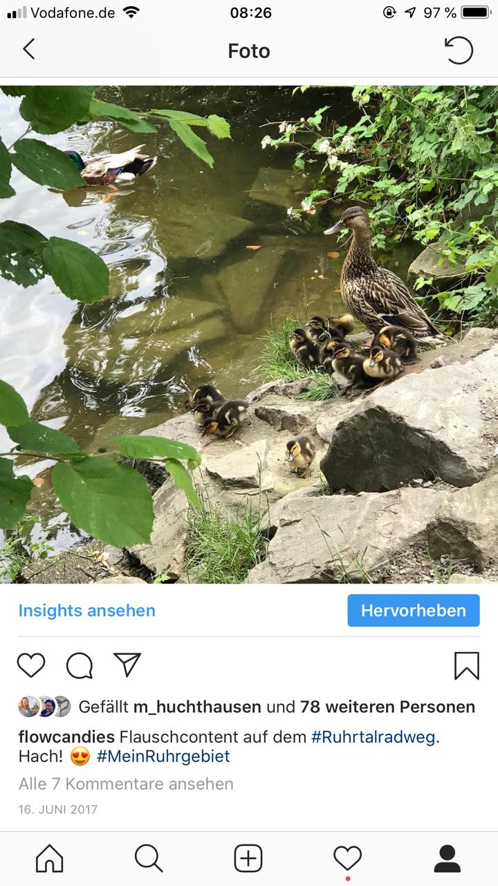 Instagram: Enten an der Ruhr