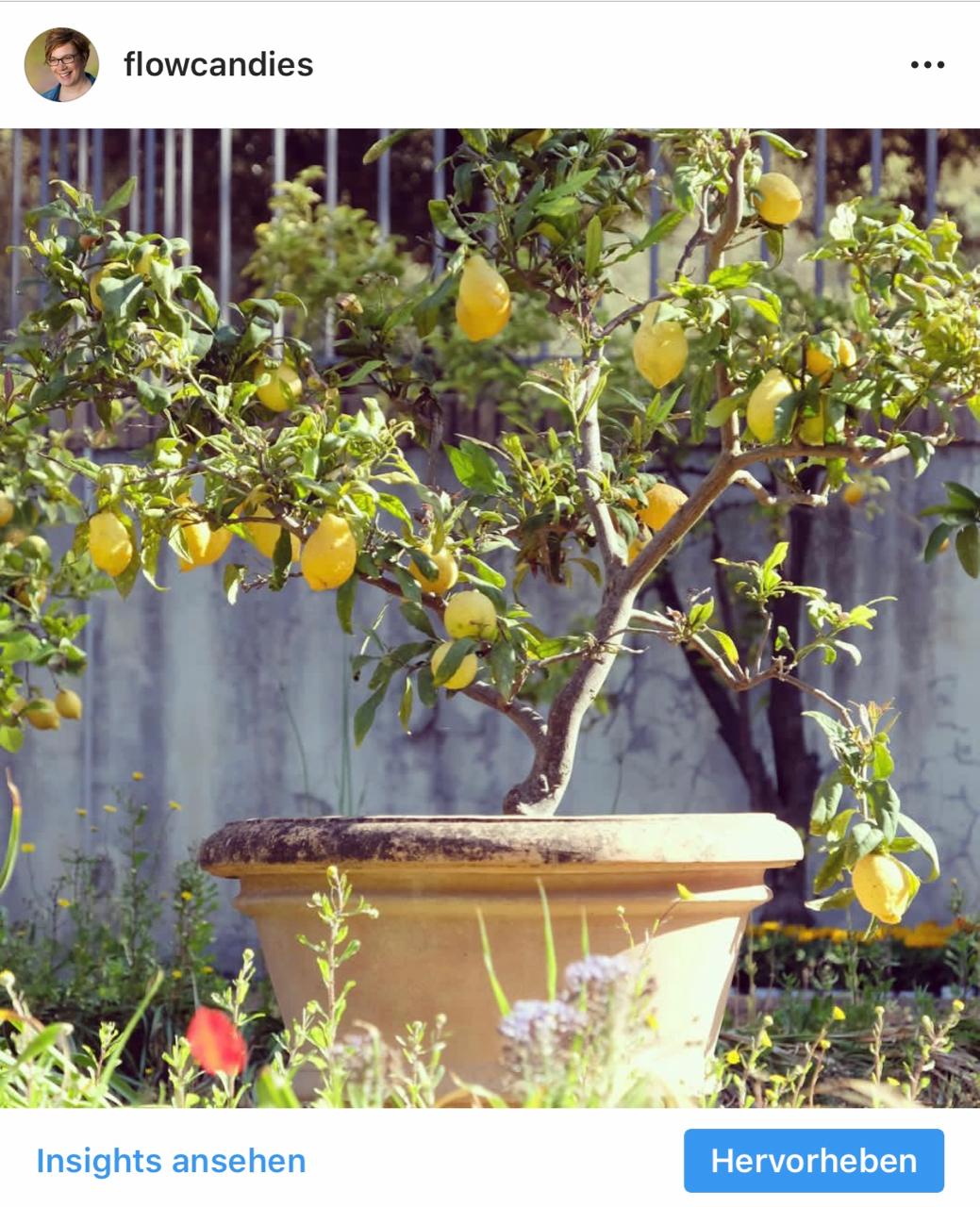 Instagram: Zitronenbaum