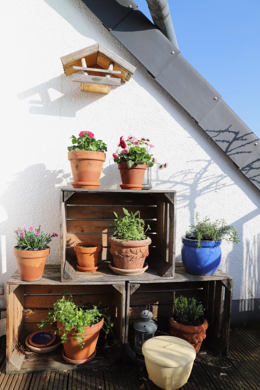 Blümchen für die Terrasse in den gestapelten Obstkisten