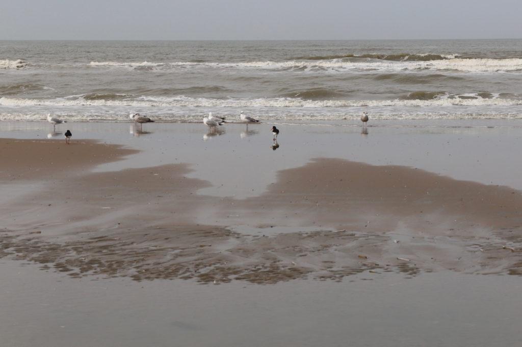 Noordwijk Strand mit Möwen