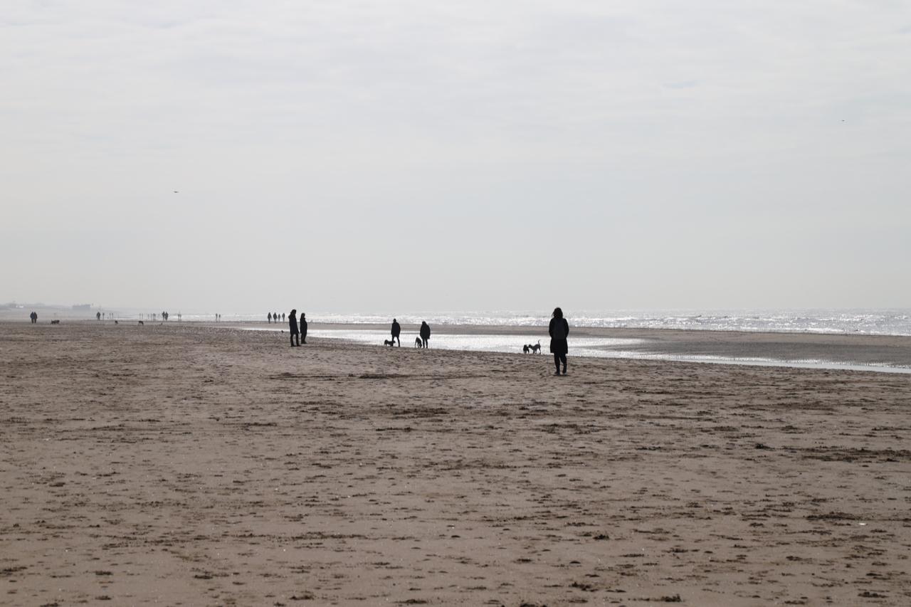 Noordwijk Strand: Menschen und Hunde