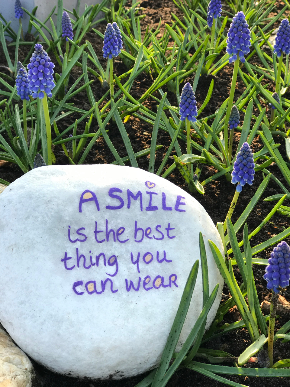 "Keukenhof: Stein mit Spruch ""A smile is the best thing you can wear"" zwischen Krokussen"