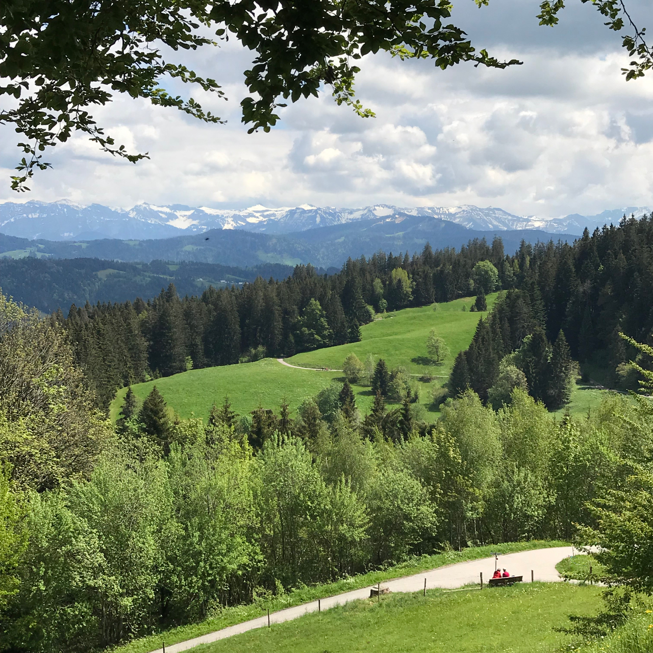 Pfänder: Blick in die schneebedeckten Alpen
