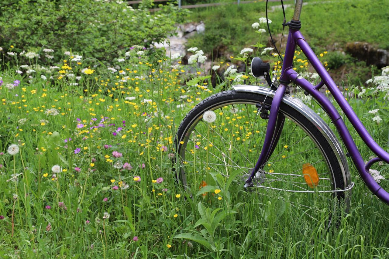 Oberstdorf: Fahrrad in der Blumenwiese