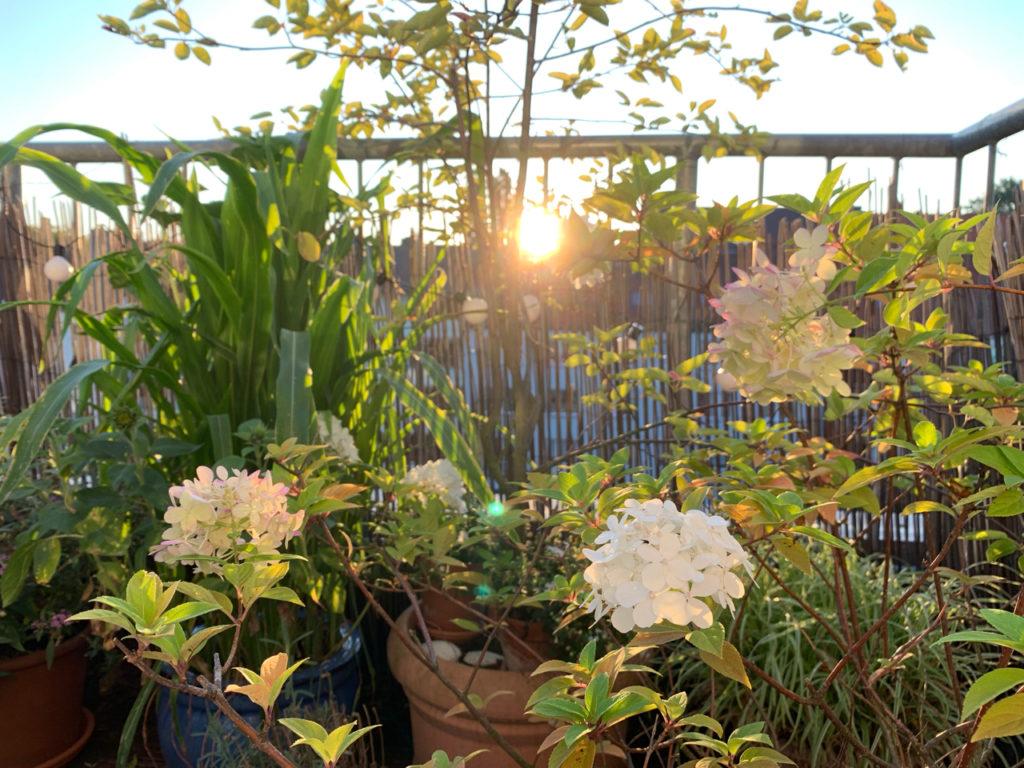 Früher Morgen auf der Terrasse