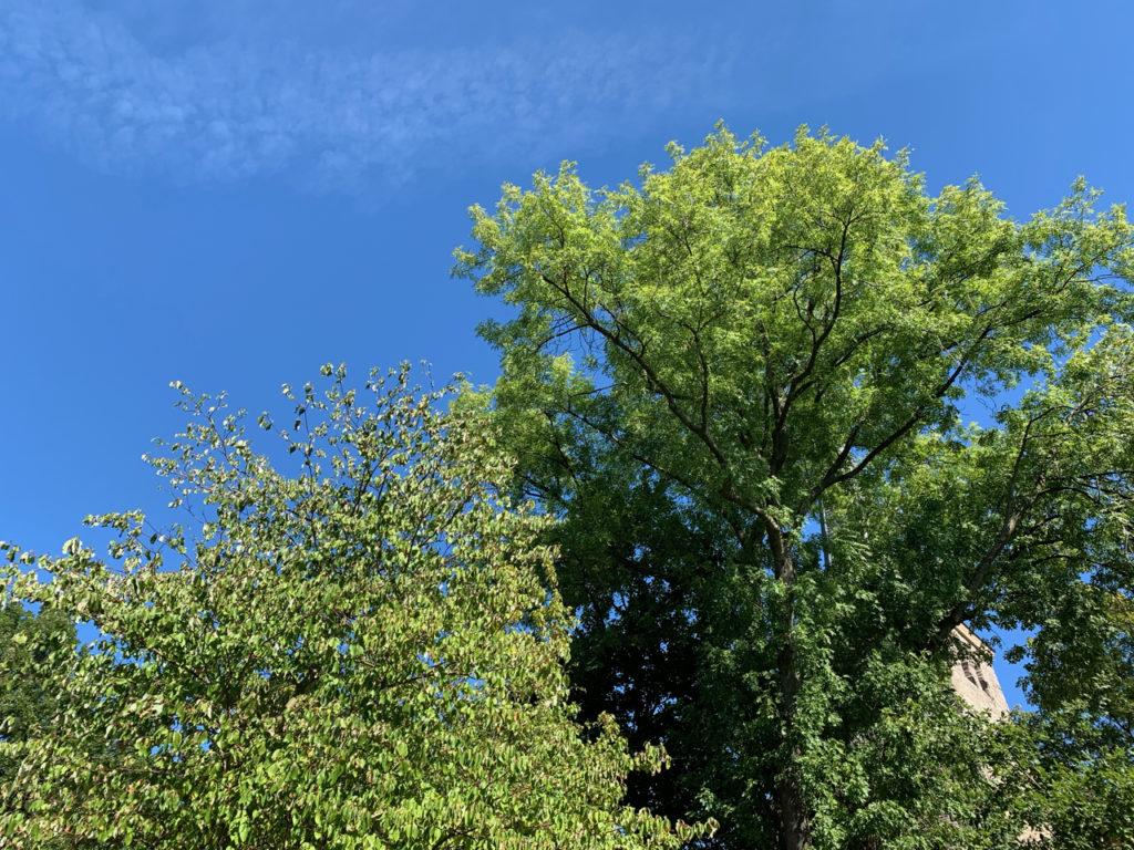 Blauer Himmel hinter grünen Bäumen
