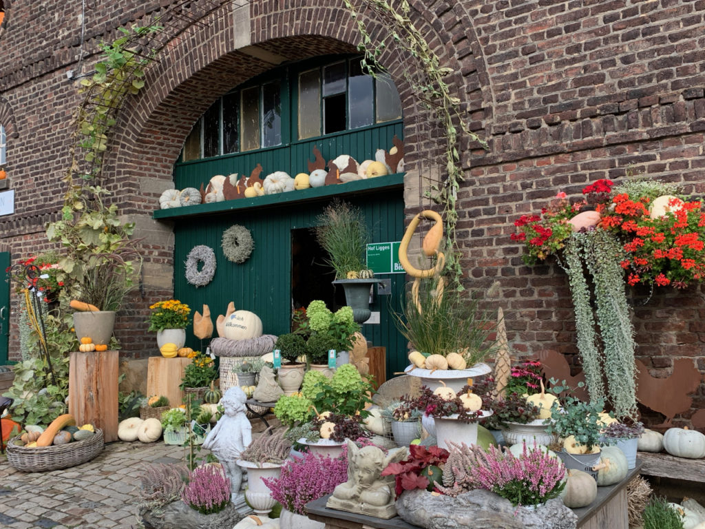 Kürbishof: Scheunentor mit vielen Kürbissen und Pflanzen davor