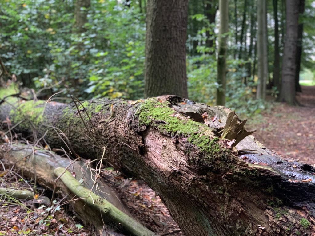 Besuch im Wald: Umgekippter Baum bemoost