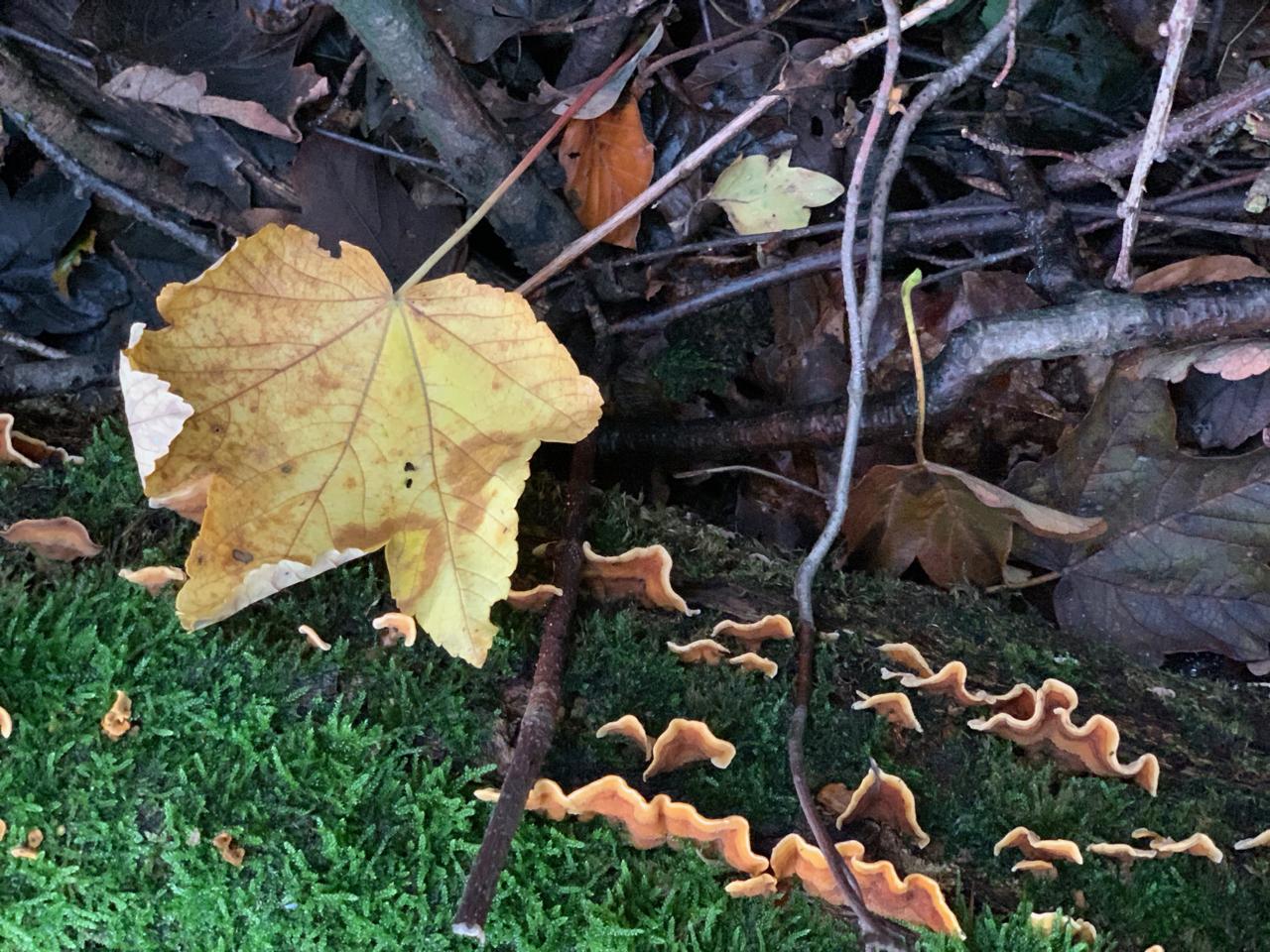 Wald: Bemooster Stamm
