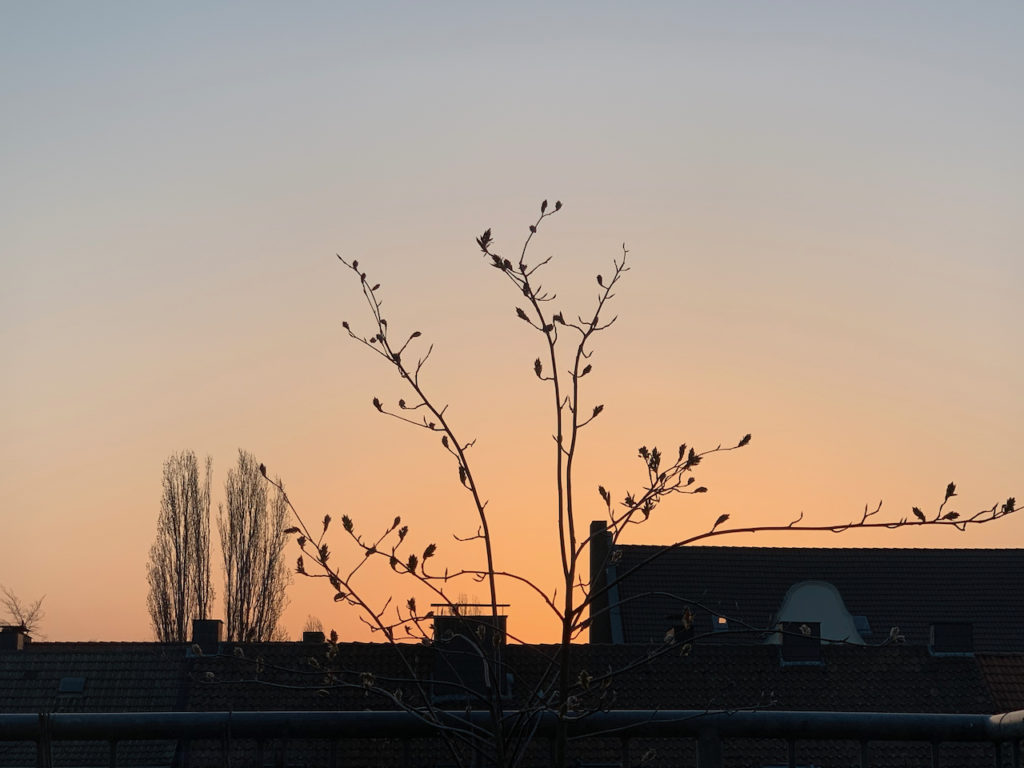 Sonnenaufgang: Scherenschnitt der Häuser und Bäume vor apricot-farbenem Himmel