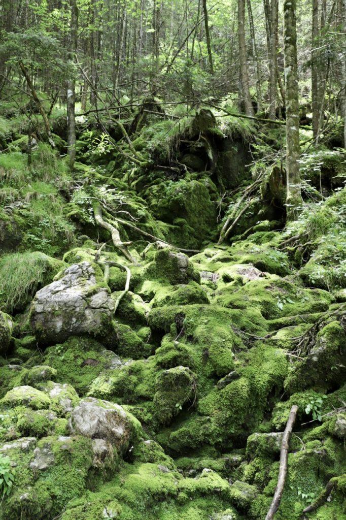 Zauberwald Ramsau: Bemooste Steine