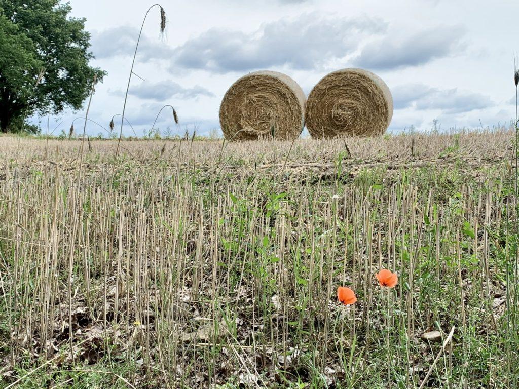 Abgeerntetes Feld mit zwei Strohballen und Baum