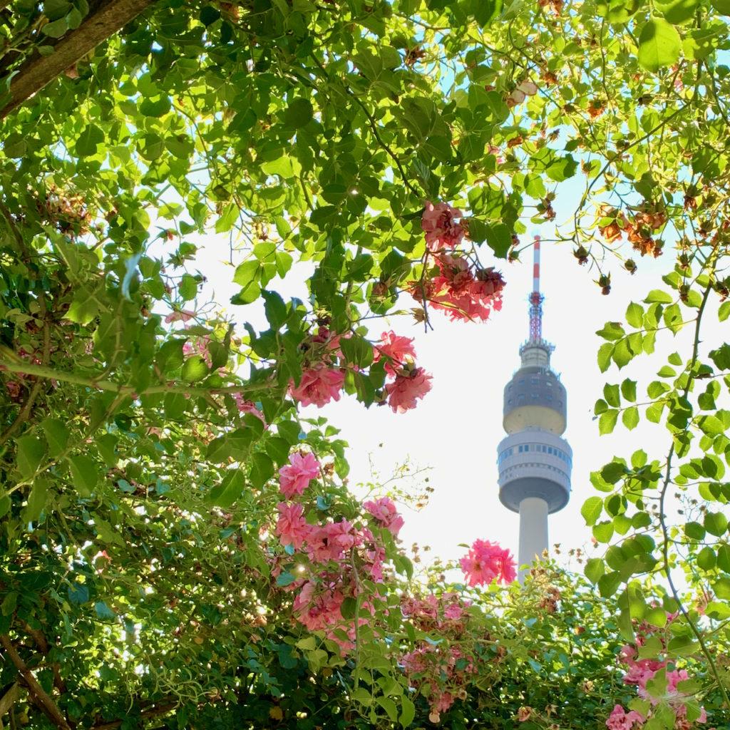 Westfalenpark: Durch ein Loch in den rosa-farbenen Rosenranken sieht man den Kopf des Florianturmes