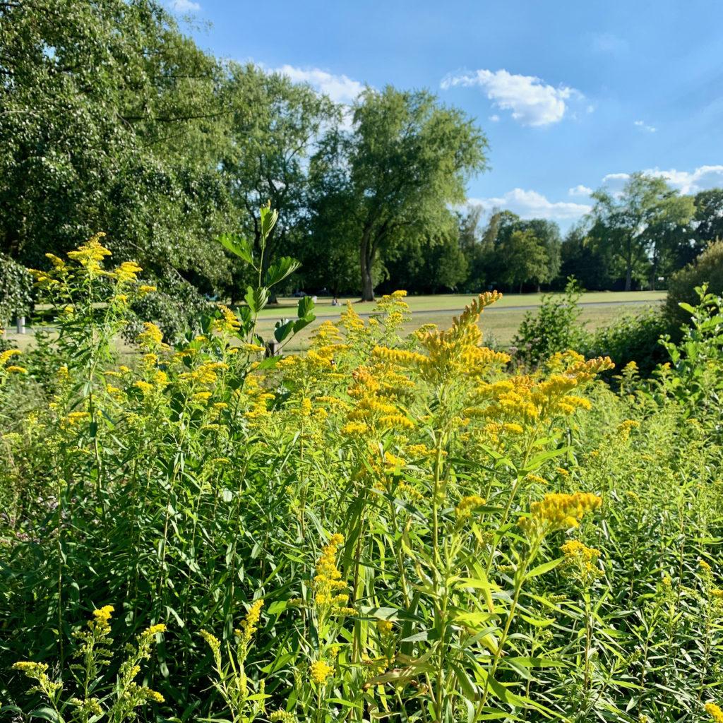 Westfalenpark: Gelbe Blumen vor Wiese und Bäumen
