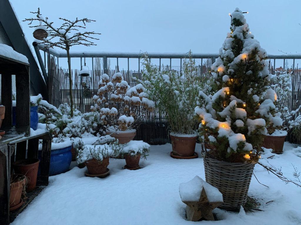Dachterasse mit Blumentöpfen und Schneehäubchen auf den Pflanzen